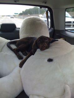 Puppy + Giant Teddy Bear