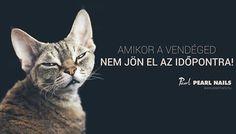 Ugye, nektek nincs is ilyen vendégetek? 😉 Aki nem jön el és nem telefonál.....😒 Pearl Nails, Pearls, Cats, Funny, Animals, Gatos, Animales, Kitty Cats, Animaux