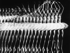 Multiple exposure of American Ballet Theater ballerina Alicia Alonso executing a pas de bourree. Photo taken by Gjon Mili, 1944 (Alicia Alonso, b. Sequence Photography, Movement Photography, A Level Photography, Dance Photography, Photography Office, Basketball Photography, Photography Lighting, Experimental Photography, Fashion Photography