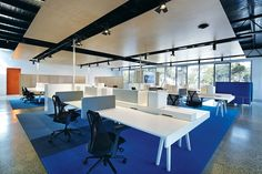 Brilliant blue carpet energizes the open-plan work area.