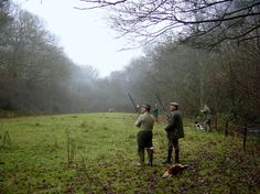 A proper English pheasant shoot