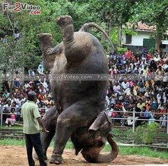 Colombo Zoo – A Meeting With Wildlife Of Sri Lanka Funny Animal Pictures, Cool Pictures, Cool Photos, Funny Pics, Hilarious, Live Animals, Funny Animals, Animal Funnies, Mon Combat