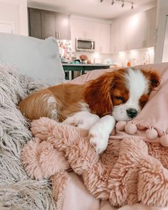 Baby Animals Super Cute, Cute Baby Dogs, Cute Little Puppies, Cute Dogs And Puppies, Cute Little Animals, Cute Funny Animals, Doggies, Cavalier King Spaniel, Cavalier King Charles Dog