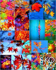 autumn decor collection, decor for sale, коллекция декора, продажа декора, осенний декор, Sokho decor studio