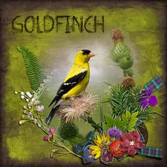 "Goldfinch.  Created using ""Fiona Collection {DOTW Scotland}"" by ADB Designs #theStudio #digitalscrapbooking"