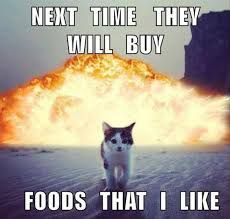 Image result for funny cat memes clean