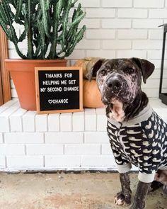 7 Ways To Help Shelter Animals If Adoption Isn't An Option Animal Shelter Adoption, Animal Rescue Site, Shelter Dogs, Animal Rescue Shelters, Rescue Dogs, Pet Adoption, Purebred Dogs, Pet Life, Dog Photos