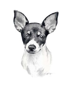 Dog Pencil Drawing, Pencil Drawings, Animal Drawings, Art Drawings, Drawing Art, Rat Terrier Dogs, Toy Fox Terriers, Pitbull Terrier, Terrier Mix