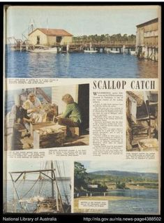 The Australian Women's Weekly 05-09-1951 : Bauer Media Group : Free Download, Borrow, and Streaming : Internet Archive Tasmania, The Borrowers, Archive, Internet, Group, Free