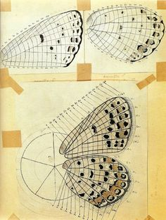 Nabokov's system developed to map patterns on butterfly wings.    brainpickings.org
