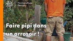 Pourquoi faire pipi dans un arrosoir ? Pour lire l'article complet : http://www.permaculturedesign.fr/pourquoi-faire-pipi-arrosoir-urine-engrais-fertiliser/ #PermacultureDesign #Permaculture #LaMinutePermaculture #FertiliserSonSol #jardin #Jardinage #FaireDesEconomies #FaireSoiMeme #QueFaireDeSonPipi #TechniquePermacole #Astuces #EngraisNaturel #PisserDansSonArrosoir #NPK