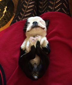 I love this happy little pup.....Making Sleeping Arrangements: Creative Ideas for DIY Dog Beds