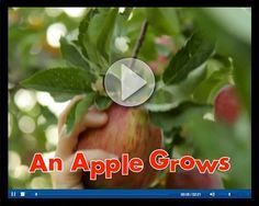 An apple grows video from Scholastic (commercial for beginning of apple unit)