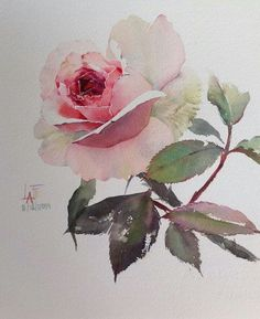 GORGEOUS Watercolor rose - LaFe