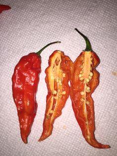 Bhut Jolokia Red Ghost Pepper - The chile paste is used for everything from hot sauce to bear spray and tear gas. It boasts a whopping 1,000,000 Scoville Heat Units. This is the best tasting super hot pepper and is great for fresh salsa, chutney, jerk sauces, and ghost pepper jam!