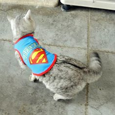 Superman cat, dog Price : 20 TL Size : M, L
