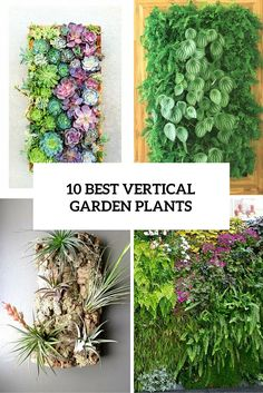 Vertical gardens are super popular now: they don't take much space, look cool and are suitable for those of us who don't have a real outdoor garden. The correct selection of plants plays an ...