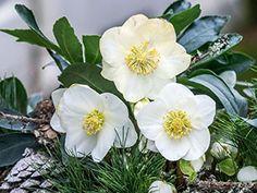 Pflanzen - Blumenbörse Mörschwil