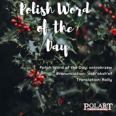 #ostrokrzew #holly #Polish #PWOTD #PolishWordoftheDay #Poland #Polska #LearnPolish #HaveaHollyJollyChristmas Learn Polish, Polish Words, Polish Language, Polish Recipes, Word Of The Day, Languages, Cleveland, Poland, Vocabulary