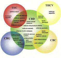 Learn the Health effects of #Cannabinoids.    #SantaMonica #CulverCity #BeverlyHills #ingelwood #Cannabis