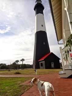 Maybelline Jones is the new mascot of the #TybeeIsland Lighthouse & she loves to welcome visitors. Make sure to stop by & say 'hello' the next time you're on the Island. #Lighthouse #Puppy