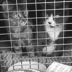 How to Move Cross Country with Cats. Helpful tips & tricks. (Pack a litterbo Tips For Moving Out, Moving Day, Moving House, Moving Hacks, Big House Cats, Moving Across Country, Cat Carrier, Pet Travel, Travel Nursing