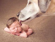 Cachorro Grande e Bebês