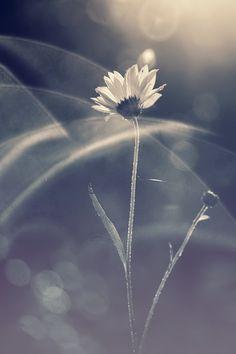 spotlight and flower   # Pin++ for Pinterest #
