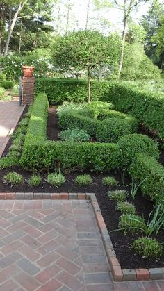 Formal English Garden - Hedges of Boxwoods and Burning bushes frame beds of perennials, roses, and other flowering shrubs.
