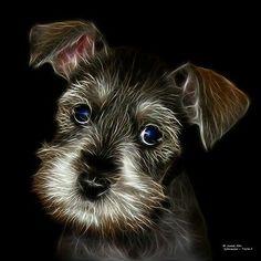 Schnauzer Pop Art 9567 - Dog Pop Art, Dog Art