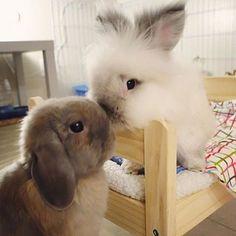 Tiere stand Cute little bunnies Se kleine Hasen Cute Baby Bunnies, Funny Bunnies, Cute Babies, Bunny Bunny, Funny Pets, Bunny Rabbits, Cute Little Animals, Cute Funny Animals, Fluffy Animals
