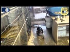 [VIDEO]Milano: il cacciatore coi cani in cantina, detenuti tra le feci e maltrattati | All4Animals - Notizie Animali