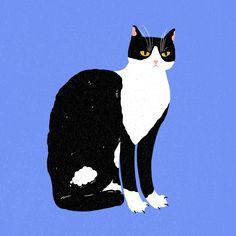 Thor Cat, Panther, Graphic Design, Cats, Illustration, Animals, Gatos, Animales, Animaux