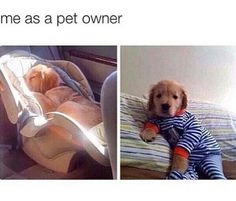 Literally me. - Funny Baby - Literally me. The post Literally me. appeared first on Gag Dad. Funny Animal Memes, Dog Memes, Funny Animal Pictures, Funny Dogs, Cute Little Animals, Cute Funny Animals, Funny Cute, Hilarious, Pug