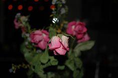 #rose #Flower #pink #dark