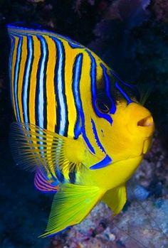 """High Quality Stock Photos of """"maldives"""" Underwater Creatures, Underwater Life, Ocean Creatures, Saltwater Fish Tanks, Saltwater Aquarium, Sea Aquarium, Beautiful Sea Creatures, Animals Beautiful, Colorful Fish"""