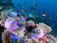 Coral Reef, Maldives