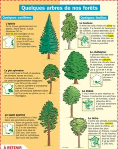 Educational infographic : Quelques arbres de nos forêts Tree Identification, French Resources, French Teacher, Science Biology, Learn French, Study French, Botanical Drawings, French Language, Science And Nature