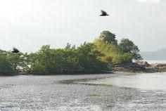 Vista geral de núcleo de manguezal.;  Alvaro E. Migotto