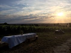 Vines in the Loire Vines, France, Celestial, Mountains, Sunset, Nature, Travel, Outdoor, Sunsets