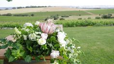 Kelly & Julian. Coriole, McLaren Vale. We do EPIC. #wedding #eventstyling #emkhostyle #weddingstyling #emkhoacreativecollective Concept & styling by www.emkho.com Event Styling, Wedding Styles, Concept, Plants, Pictures, Photos, Plant, Grimm, Planets