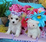 Dog Food Recipes, Teddy Bear, Pets, Animals, Design, Animales, Animaux, Dog Recipes, Animais