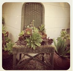 Chairs as Planters Pinterest | chair planter