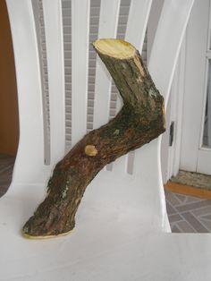 FÓRUM do Atelier do Bonsai - Mário A G Leal :: Exibir tópico - Toco de Bougainvíllea!