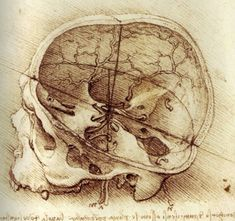 Anatomical studies of the human skull by Leonardo Da Vinci. 1487-1519.