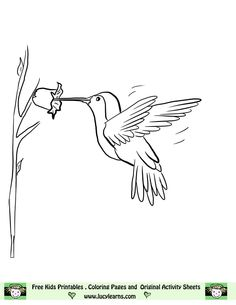 hummingbird picture to color google search