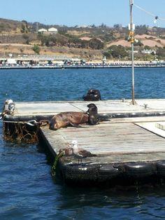 Seal tour San Diego