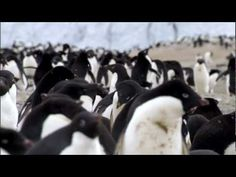 The Ross Sea, Antarctica is the world's most untouched and intact marine ecosystem. But the fishing industry has now found its way to the Ross Sea, targeting Antarctic toothfish and unless fishing is stopped the natural balance of this unique ecosystem will be lost forever.   Visit the website http://www.lastocean.org to find out more.