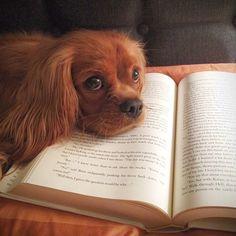 pets, livros