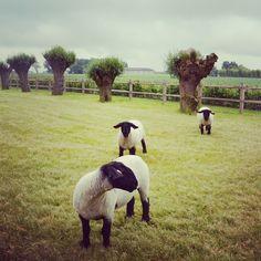 in progress. Garden Animals, Cute Diys, Farm Life, Water Features, Garden Inspiration, Sheep, Life Is Good, Shelters, Landscape